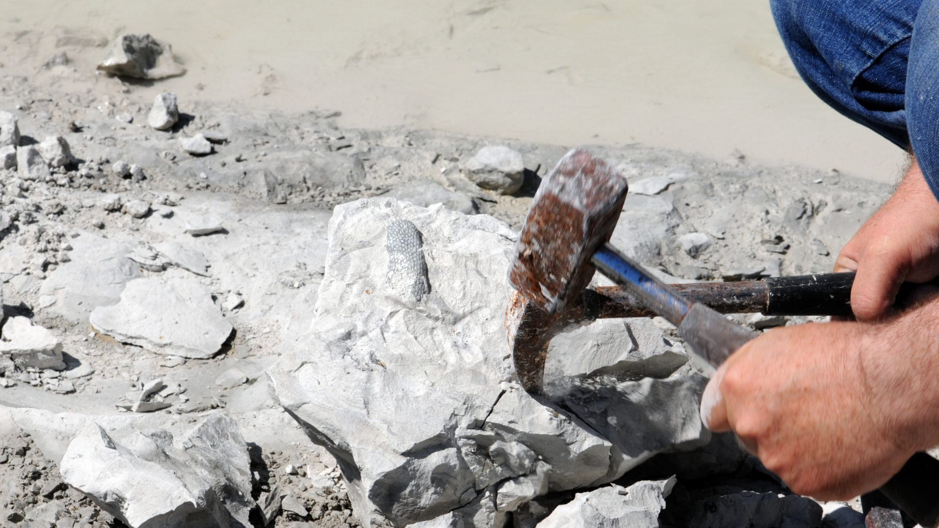 collecting fossils. get coral fossil out of a chalk rock.
